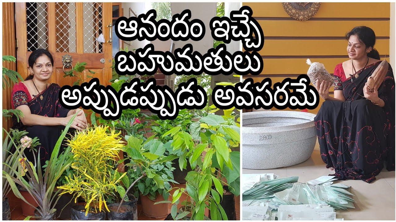 Surprise plant gifts from husband my from kadiyam/ఊరు నుంచి ఏం తెచ్చారు చూడండి #plants #gardening