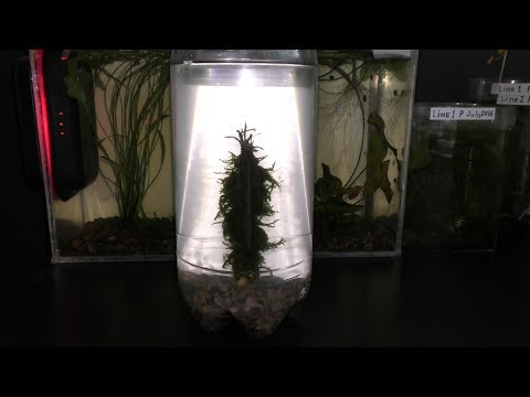 Aquarium Driftwood DIY
