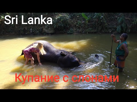 Sri Lanka. Катание, купание и душ на слоне. Первое место посещения из двухдневной экскурсии.