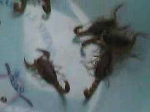 qingdao scorpions.divx