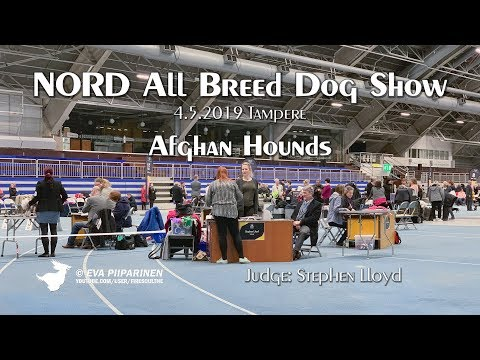 NORD All Breed Dog Show In Tampere 4.5.2019 ► Afghan Hounds