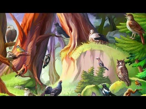 Видео Птицы россии названия и фото
