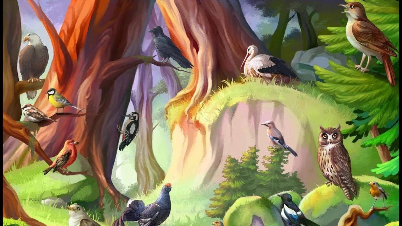 картинки с птиц наших лесов верхний слой сама