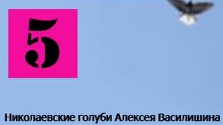 Голуби Крыма Алексей Василишин, Евпатория (4)(Крым Евпатория Лётные Торцовые Голуби +79780085391., 2015-02-15T11:16:17.000Z)