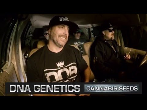 DNA Genetics - The Smokebox | BREALTV