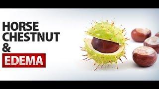 Horse Chestnut For Reducing Edema