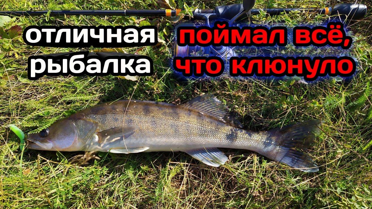 НЕ ЗРЯ ПРОШЕЛ СТОЛЬКО ПО БЕРЕГУ! Ловля щуки и судака на джиг. Рыбалка на реке.