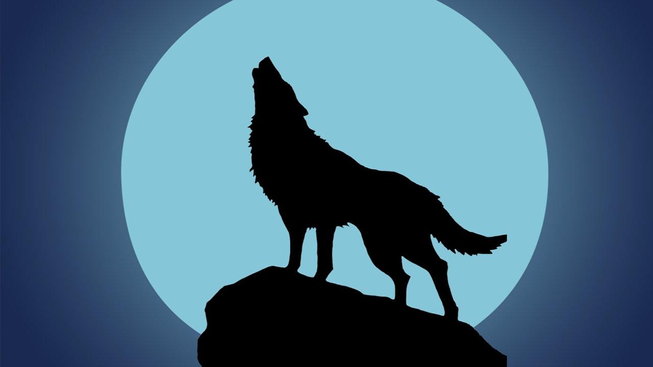 Lobo Aullando Efecto De Sonido Wolf Howling In Night Sound Effect