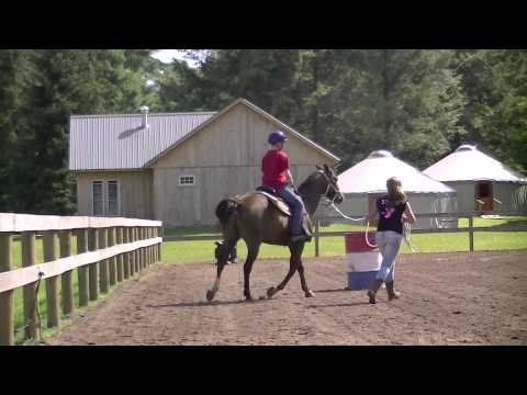 Frost Valley YMCA Horse Programs