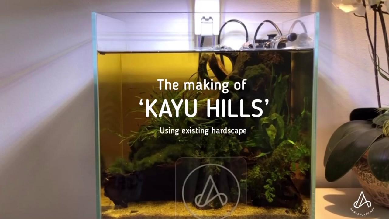 Aquarium Ideas: How to set up 'Kayu Hills' Aquascape ...