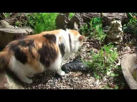 Australia,Adelaide,Germany Village,cats,澳洲阿德雷德,德國村,貓咪