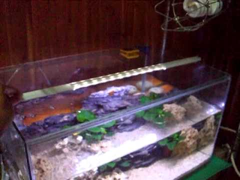 Diy aquarium led light youtube mozeypictures Image collections