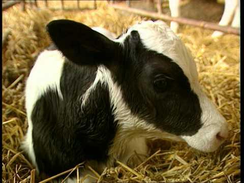 Sur le plancher des vaches - C'est pas sorcier