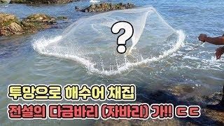바다에서 투망중에 전설의 자바리(다금바리)가ㄷㄷ한마리 수백만원? [TV생물도감]