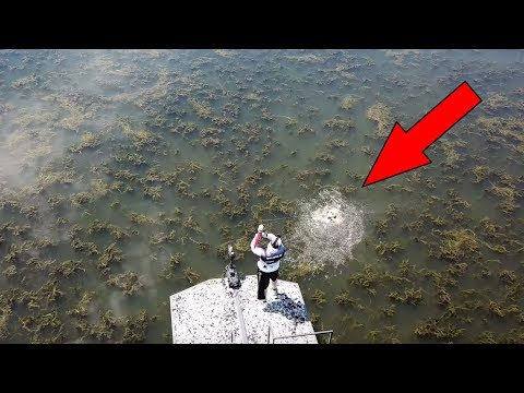 Bow Fishing INVASIVE CARP Species! (MULTIPLE DRONE HITS!!)