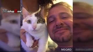 Топ 10 Смешных Видео Кошек-Funny Cats