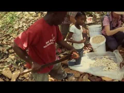Be a Cocoa farmer for the day