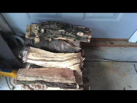 What Could Come Into Your Home With That Firewood? - Fayetteville Georgia Termite and Pest Control