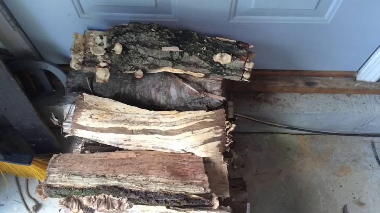 Termites In Firewood