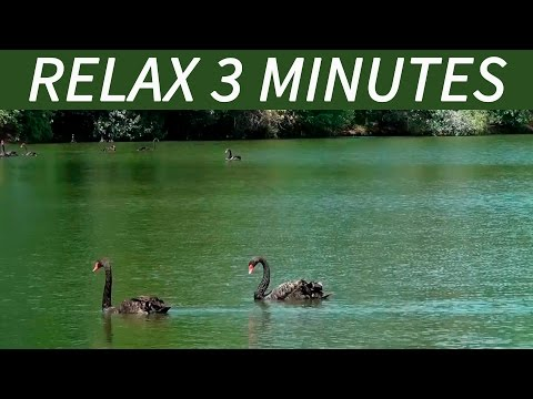 Relax 3 Minutes  Relaxing Bird Songs, Lake