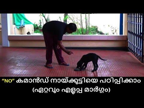 dog training : 'no' Command  Malayalam : kerala dog training : വളര്ത്തു നായയെ പരിശീലിപ്പിക്കാം