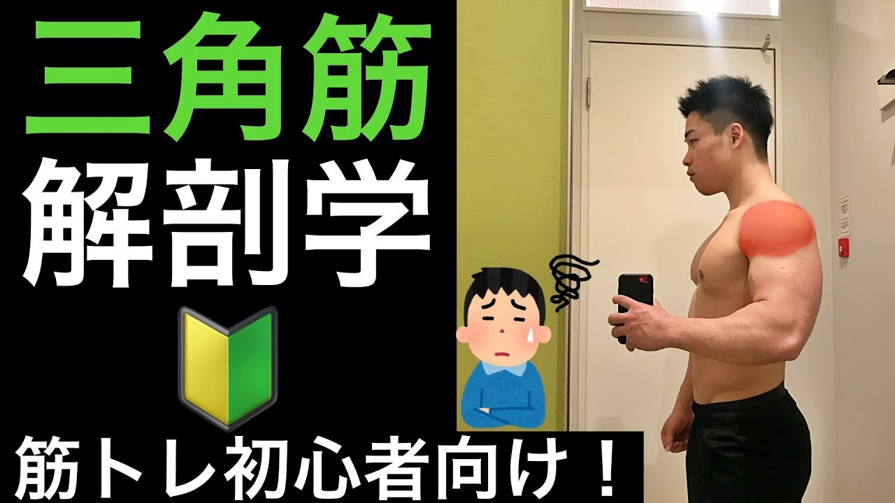 fb743e47ddb 解剖学】【筋トレ初心者向け】誰でも分かる肩の解剖学!! - YouTube