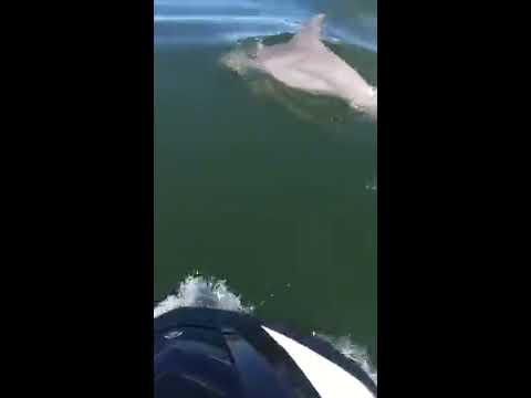 jet ski with dolphins