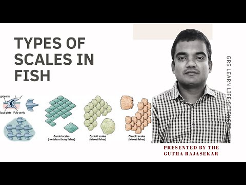 Types Of Scales In Fishes|Scale In Fishes| Part1| Placoid | Cycloid| Scales Of Fishes In English
