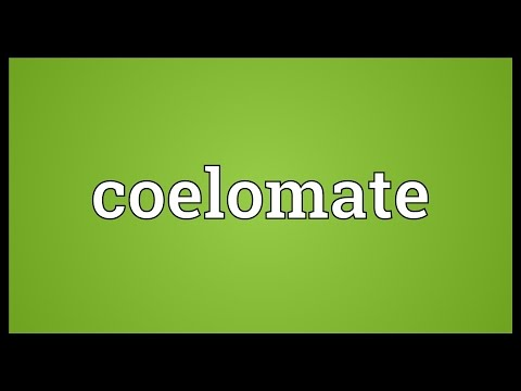 Coelomate Meaning