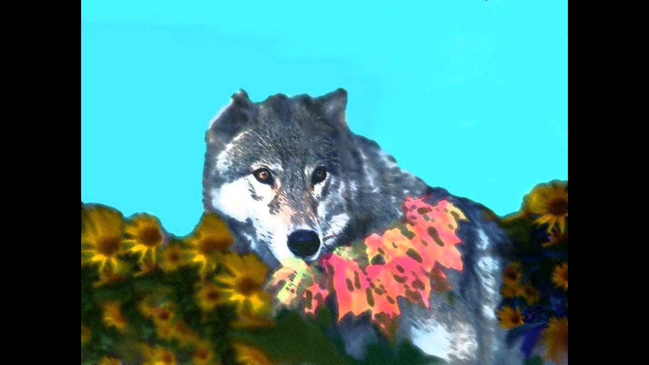 Il lupo e il pastore youtube