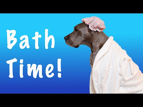 Tips for EASY Bathes with your Great Dane! | Great Dane Care