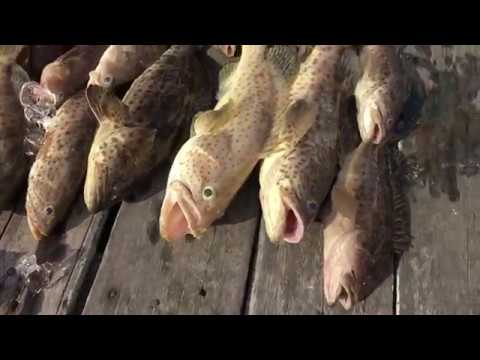 Chia Soon Kelong - Part 2 (Fishing Fun!)