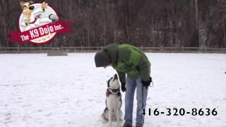 The Ultimate Siberian Husky Toronto Dog Training