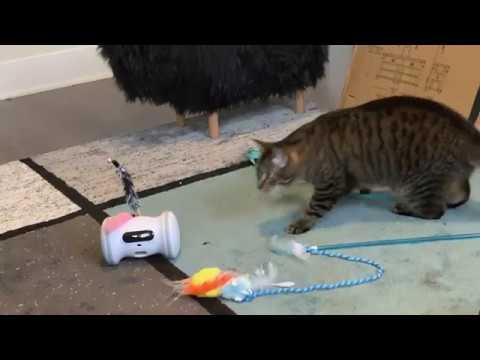 Elista Cat - Varram Pet Fitness Robot (Vroom Vroom Vroom!)