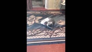 Кот занимается любовью с шерстяным носком😂