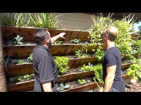 Grow 120 Sq Ft Of Garden Up Your House Or Wall Amazing
