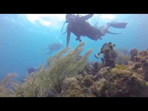 turtle-rock-with-dolphin-dive!-little-corn-island,-nicaragua