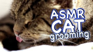 ASMR Cat - Grooming #32