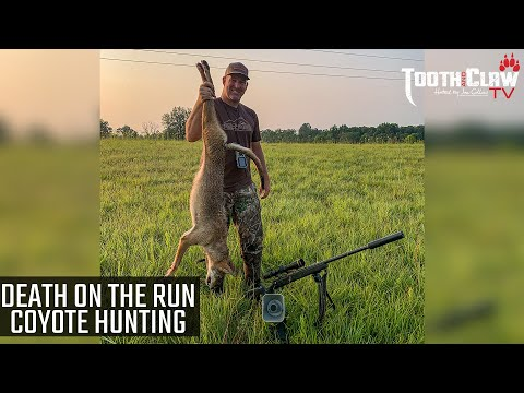 Death On The Run – Coyote Hunting