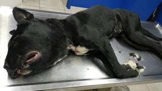 Abandoned dog was found with a wire so tight around her neck that couldn't breath.