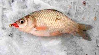 Зимняя рыбалка на карася со льда. Уроки ловли от профи.