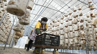 China economy rebounds, avoids recession
