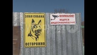 Житель пригорода Хабаровска убил соседских собак ради мяса. MestoproTV