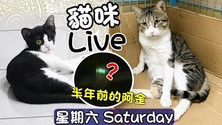 貓咪Live實況#116 公開!半年前的阿金~三隻貓咪的緣分❤ 20190615(汝汝杉杉與黑妞MiMi醬)