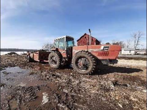 International Harvester 3588 Hauling Manure!