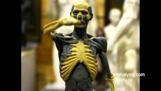 Лепка экорше по скелету - Обучение скульптуре. Фигура, 3 серия