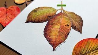수채화 그림 그리기 가읗 낙엽 손그림