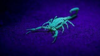 The Anomalies: Venom Race  | California Academy of Sciences