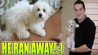MY DOG RAN AWAY! :(