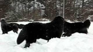 2011.2.12 雪の降る清里の新雪の中で思いっきり雪遊び。ストー...